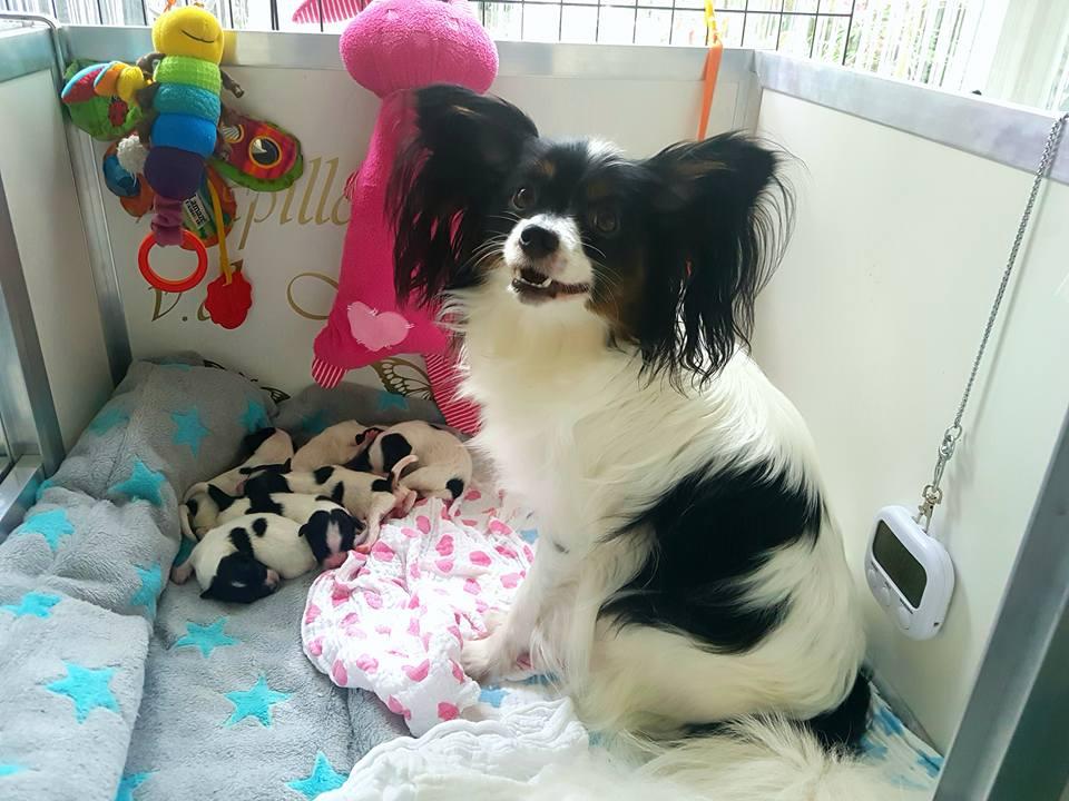 Brief van een moeder hond aan de nieuwe eigenaren van haar pup: