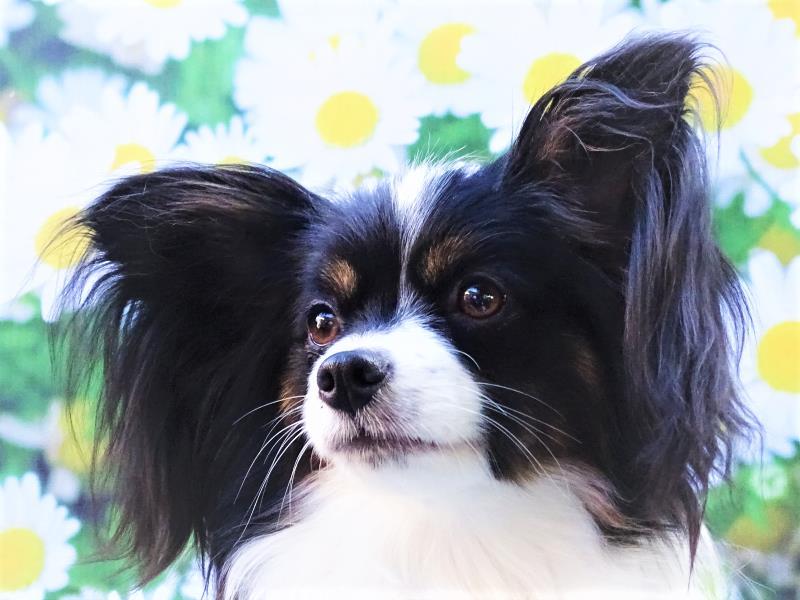 Bella is 3 jaar geworden!