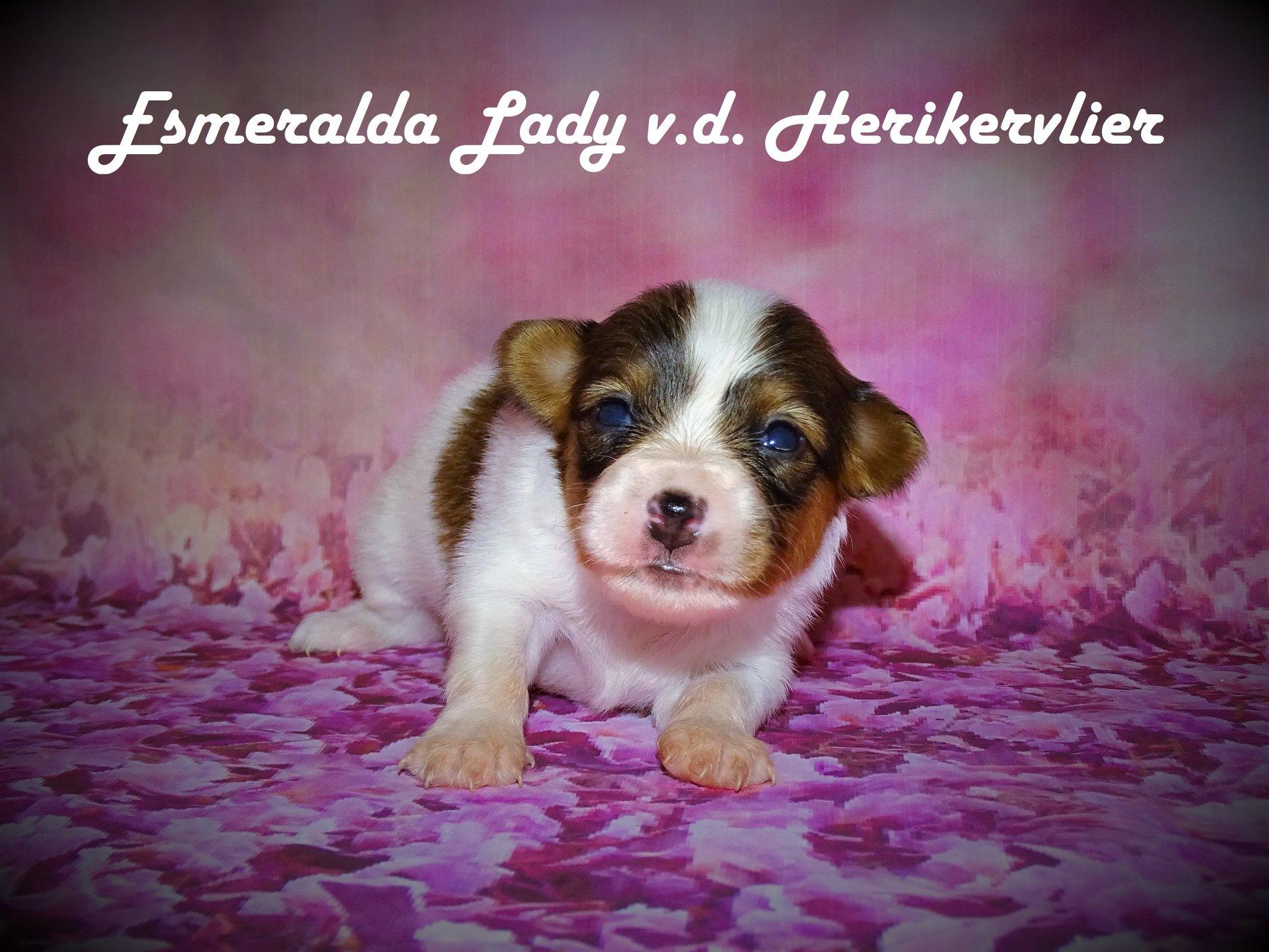 Puppy's nu twee weken!