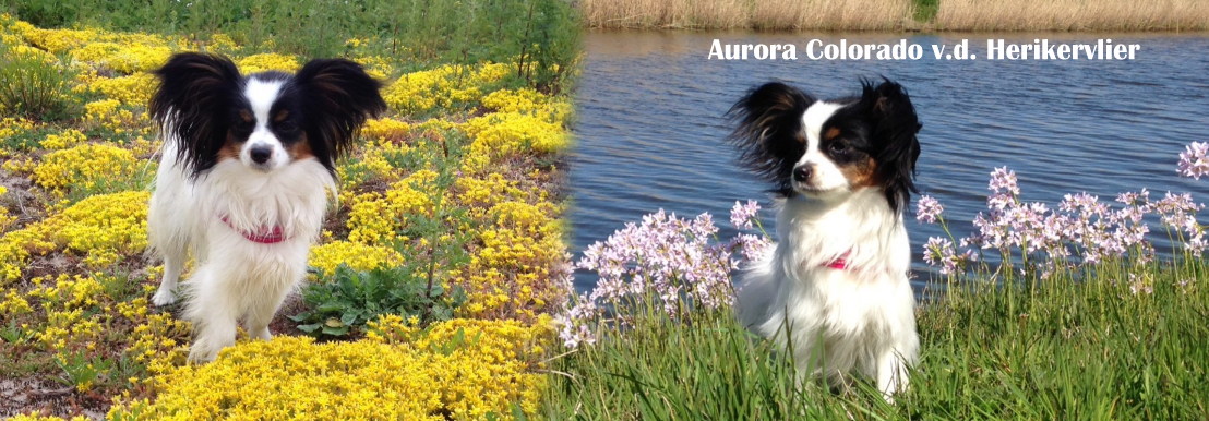Aurora Colorado v.d. Herikervlier