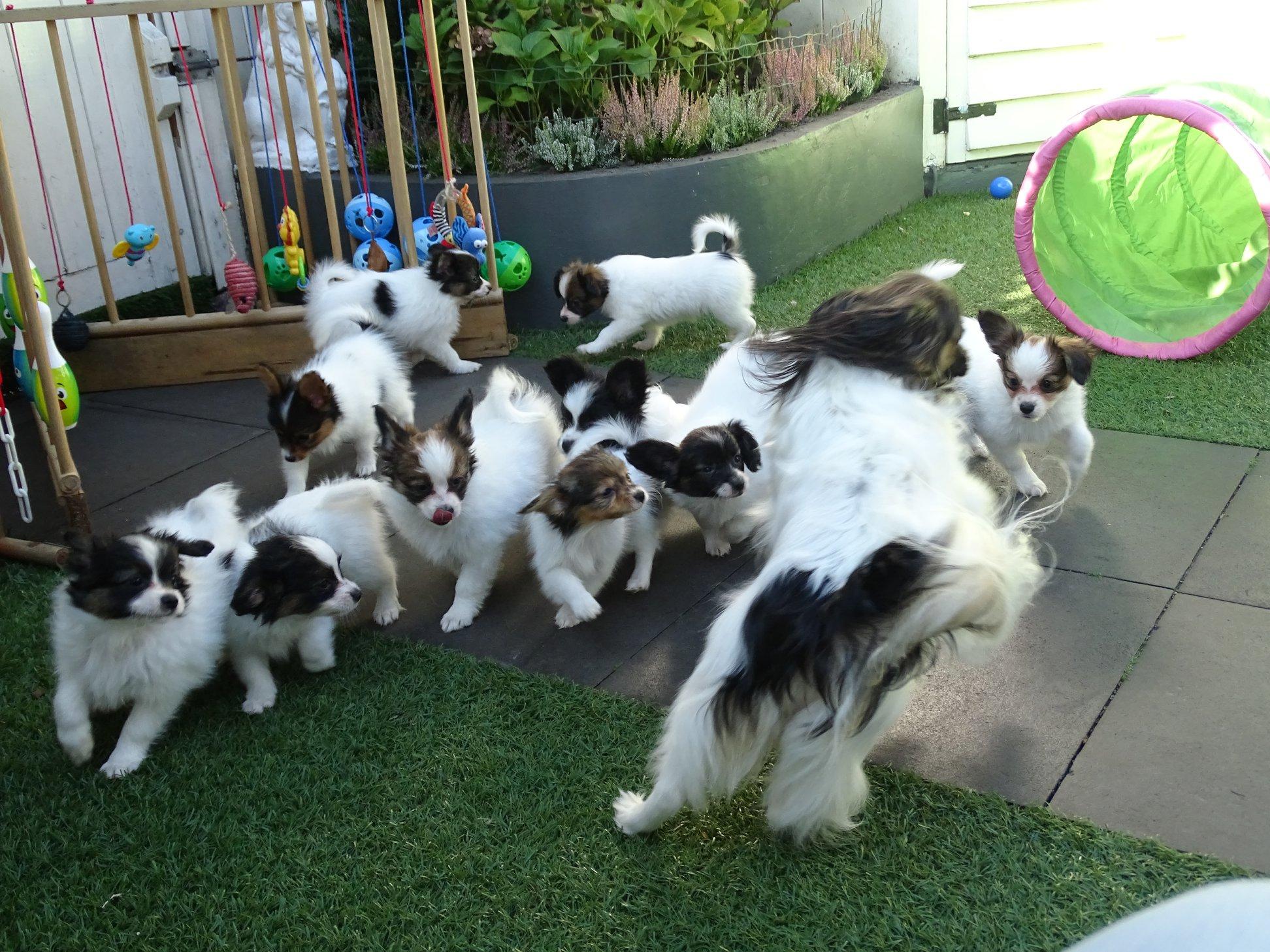 Socialisatie van onze puppy's