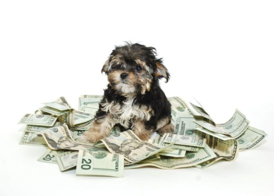 Wat kost een pup?