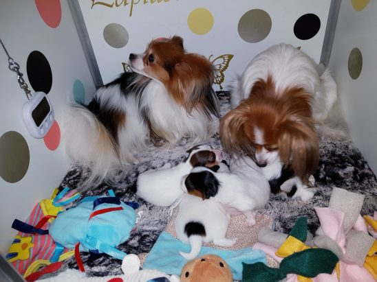 Puppy's 2,5 weken oud